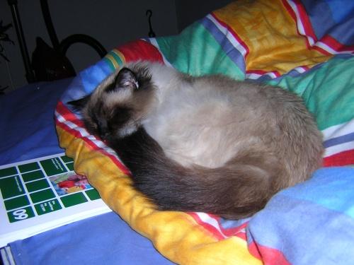 Pidde sovandes så nöjt
